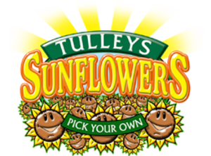 Tulleys Sunflowers - Pick Your Own